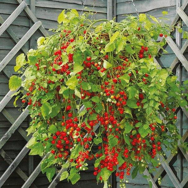 Садим цветы на даче фото