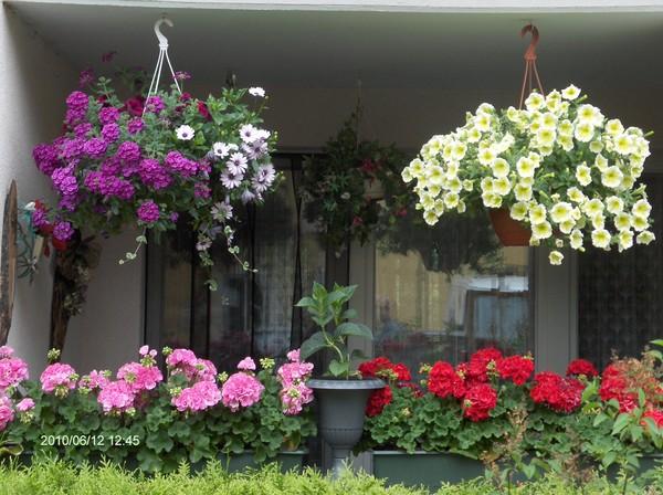 Цветы на балконе. обсуждение на liveinternet - российский се.