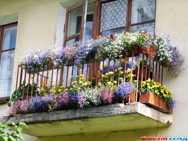 Цветы на южном балконе. - остекление лоджий - каталог статей.