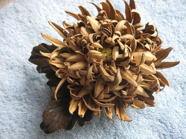 цветуеч (596x447, 59Kb)