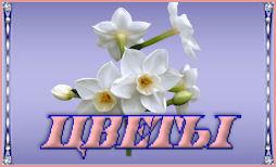 57 цветы (254x154, 12Kb)