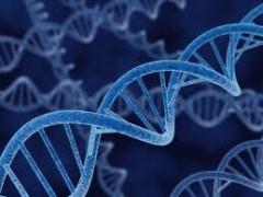 2996226_DNA (240x180, 14Kb)