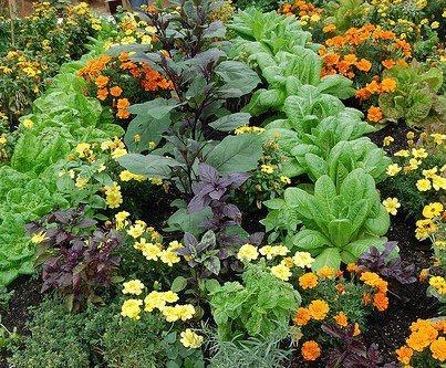 Совмещенные посевы огородных