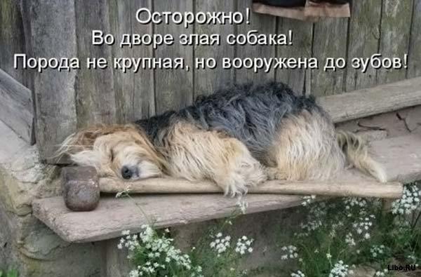 3821971_zlaya_sobaka (600x395, 57Kb)