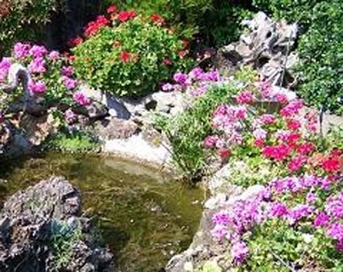 В специализированных магазинах многолетние цветы для клумб можно приобрести в горшочках, диаметр которых составляет...
