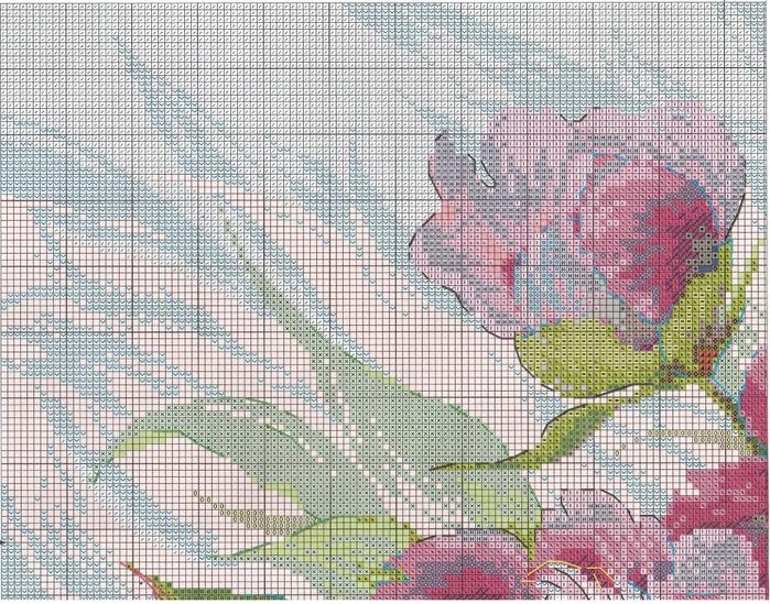 Stitchart-rozovye-piony1 (700x549, 427Kb)