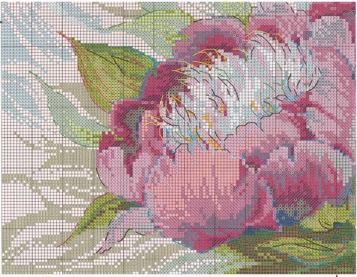 Stitchart-rozovye-piony3 (700x544, 429Kb)