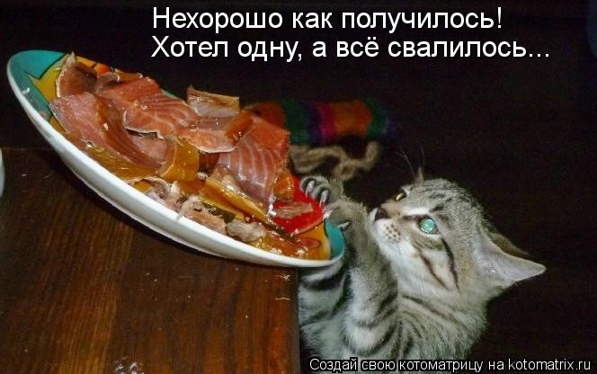 kotomatritsa_dg (664x416, 47Kb)
