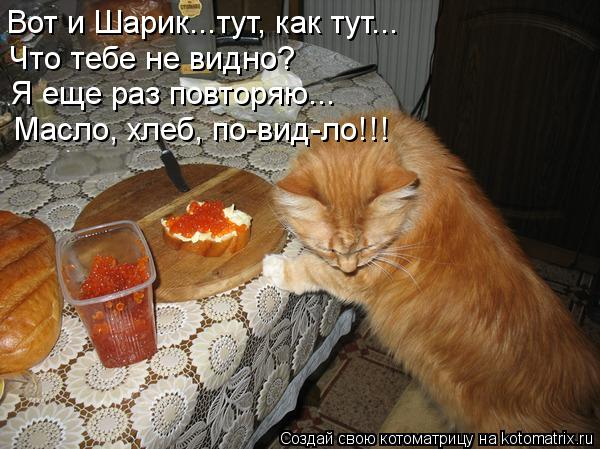 kotomatritsa_pD (600x449, 62Kb)
