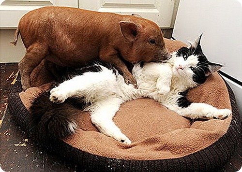 gal_cuddly_animals_1 (500x356, 80Kb)