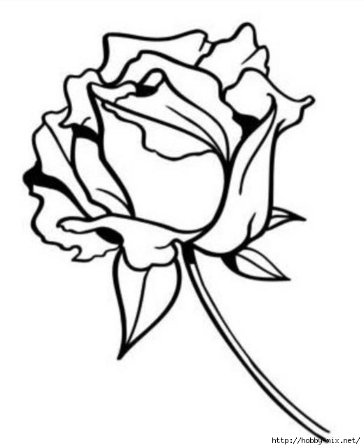 """Оригинал - Схема вышивки  """"Роза монохром """" - Схемы автора  """"Katerina540 """" - Вышивка крестом."""