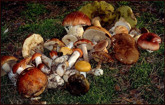 грибы (700x446, 451Kb)