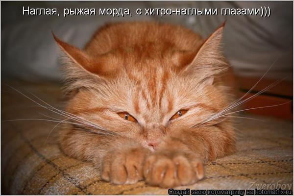 http://img1.liveinternet.ru/images/attach/c/8/101/282/101282535_l5jtcpcmmxyygggg.jpg