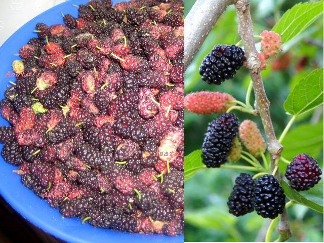 mulberries (640x480, 108Kb)