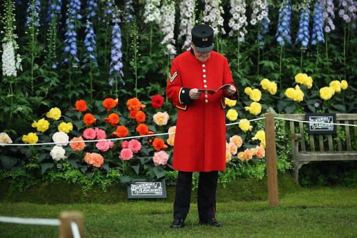 Chelsea Flower Show 2013 9 (700x466, 102Kb)