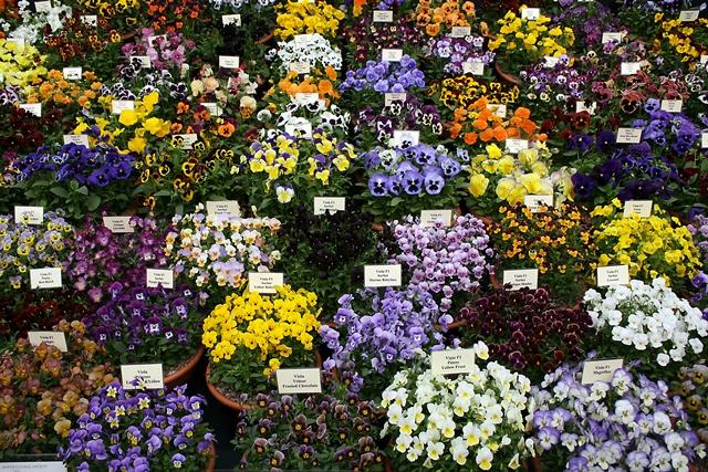 Chelsea Flower Show 2013 11 (640x427, 334Kb)