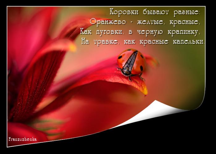 foto_modelo1-1.png.klo (700x500, 367Kb)