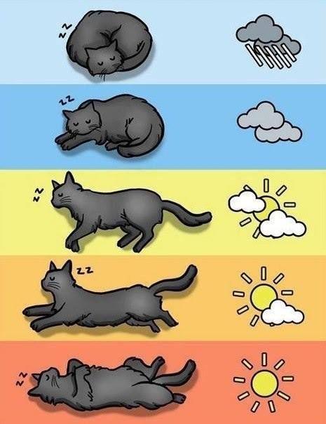 кот, как прогноз погоды/1369497310_pogoda (465x604, 41Kb)