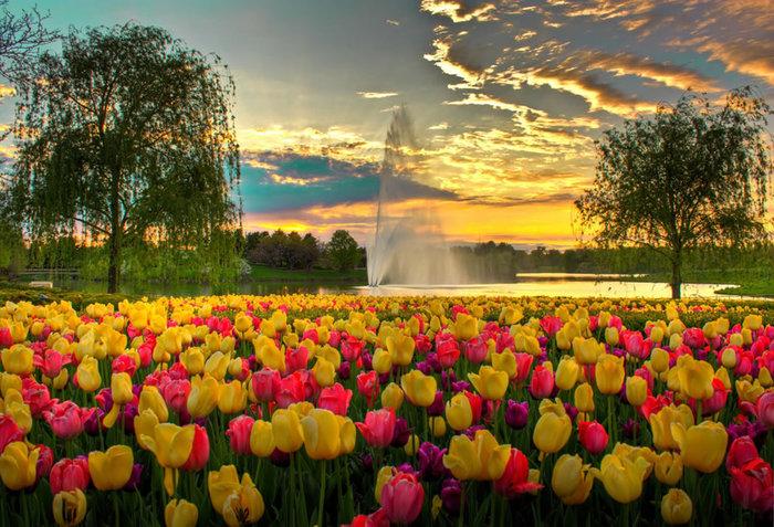 цветущие цветы (700x477, 144Kb)
