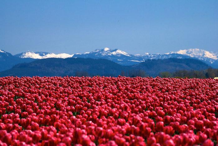 цветущие цветы 2 (700x468, 109Kb)