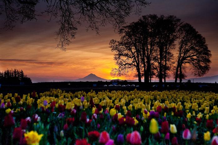 цветущие цветы 3 (700x466, 104Kb)