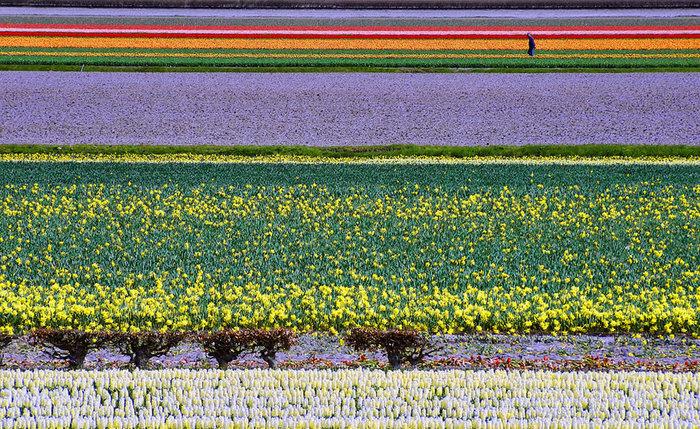 цветущие цветы 5 (700x429, 209Kb)