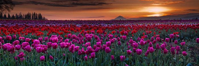 цветущие цветы 7 (700x233, 76Kb)