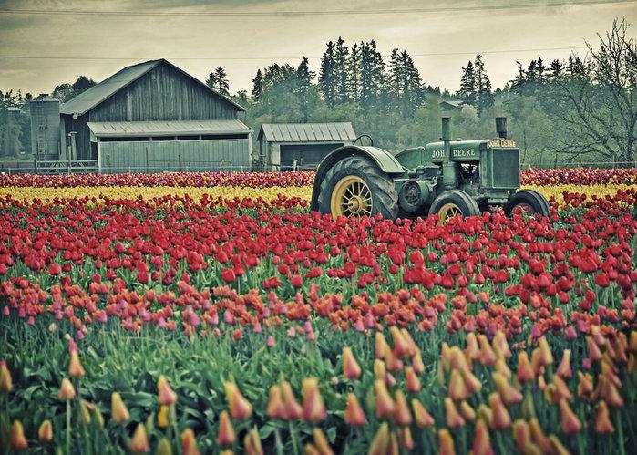 цветущие цветы 9 (700x499, 149Kb)