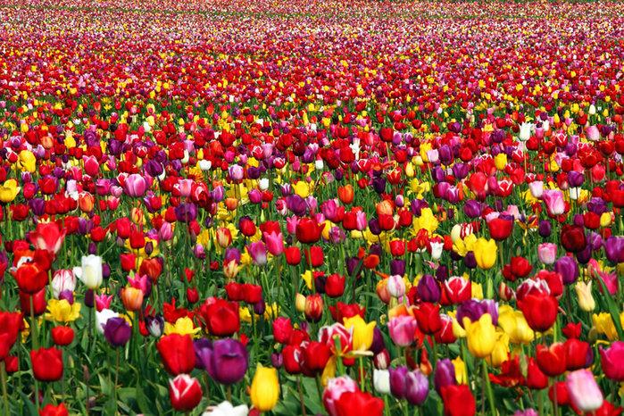 Фото самых красивых цветов мира