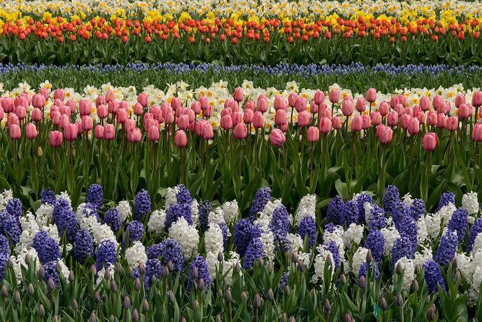 цветущие цветы 11 (700x467, 172Kb)