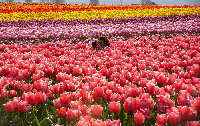 цветущие цветы 13 (700x440, 189Kb)