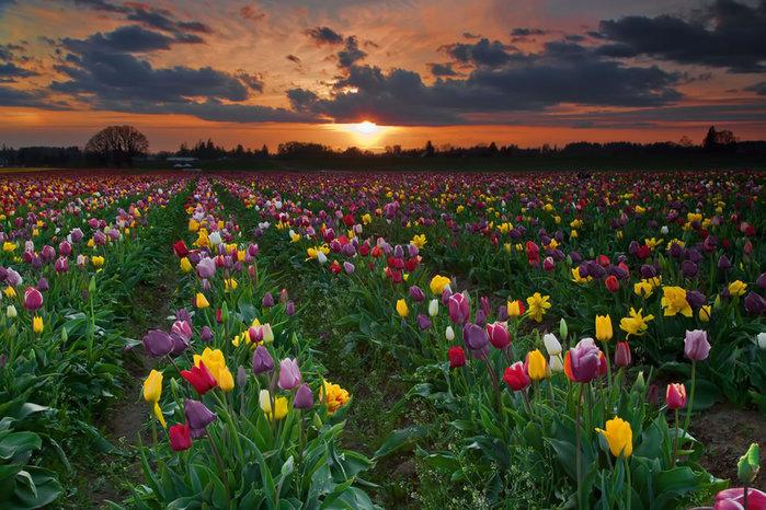 цветущие цветы 14 (700x466, 128Kb)