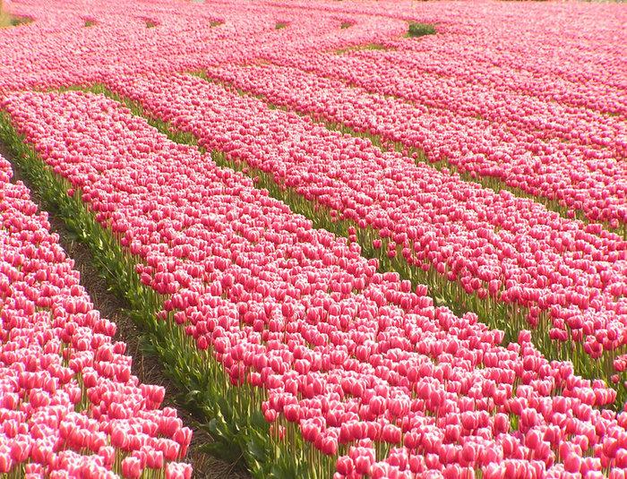 цветущие цветы 16 (700x535, 256Kb)