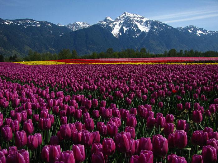 цветущие цветы 18 (700x525, 134Kb)