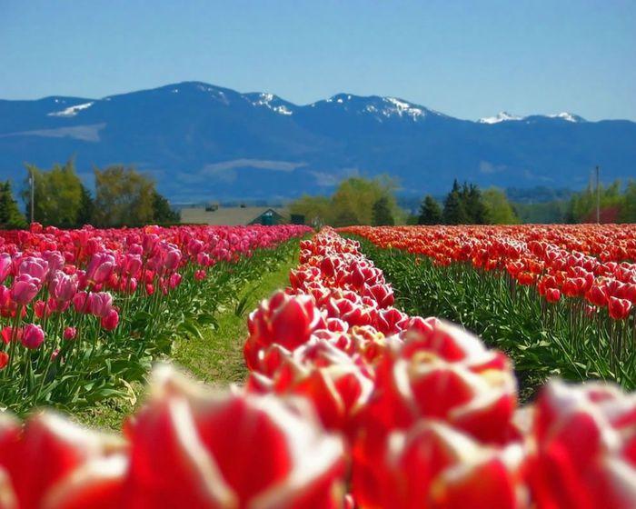 цветущие цветы 21 (700x560, 68Kb)