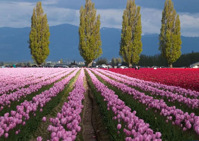 цветущие цветы 24 (700x494, 115Kb)