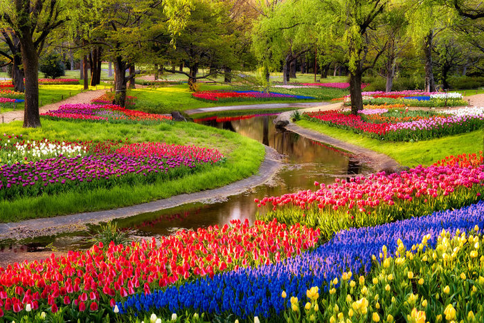 цветущие цветы 26 (700x467, 209Kb)