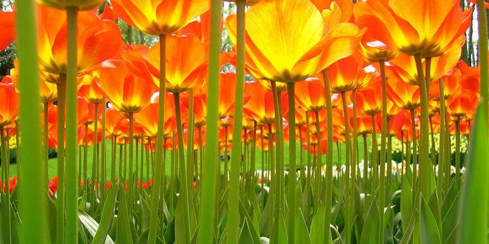 цветущие цветы 28 (700x350, 89Kb)