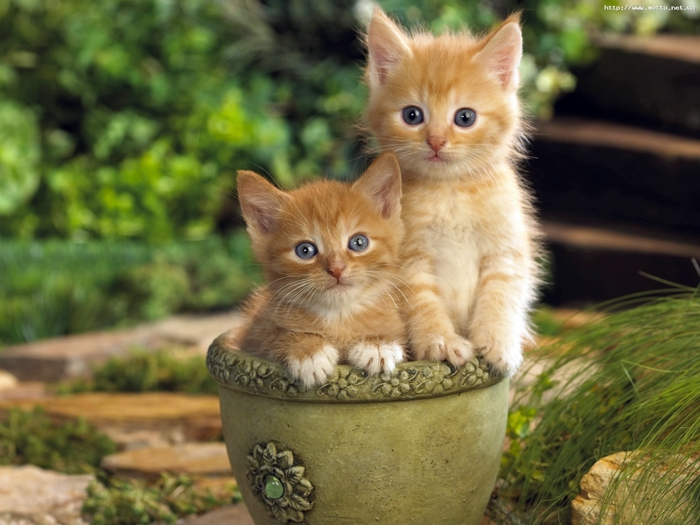 Похожие изображения / Изображение 10536 - Котята в цветочном горшке.  Животные / Фабрика картинок - PicsFab.com.