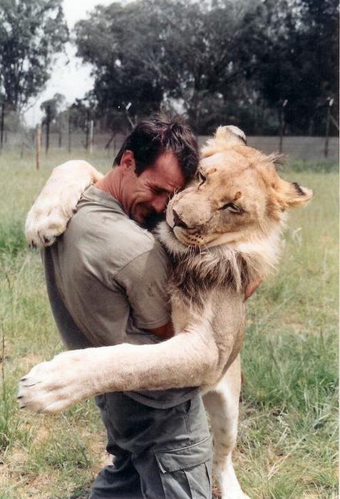 Kevin Richardson львы фото 3 (477x700, 118Kb)