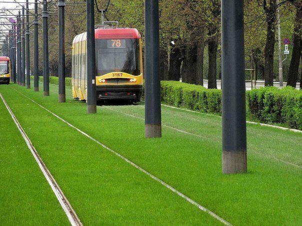 В Варшаве осуществили интересный экологический проект. Трамвайные пути на нескольких городских маршрутах засеяли травой (604x453, 69Kb)