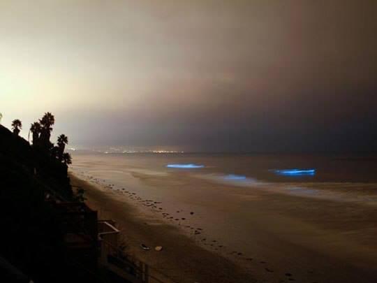 Светящийся планктон на пляже острова Ваадху, Мальдивские острова (540x405, 12Kb)