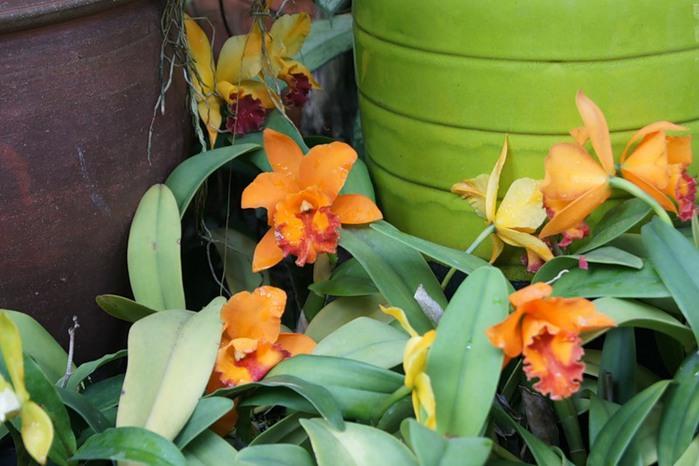 цветы тая13 (700x466, 87Kb)