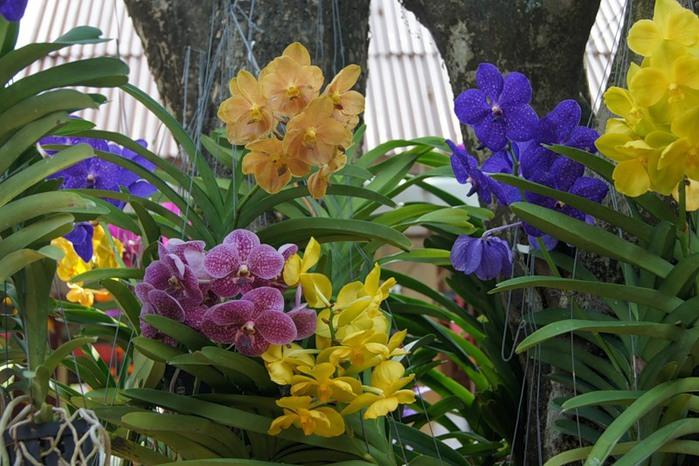 цветы тая16 (700x466, 116Kb)