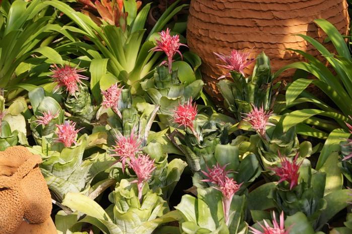 цветы тая21 (700x466, 131Kb)