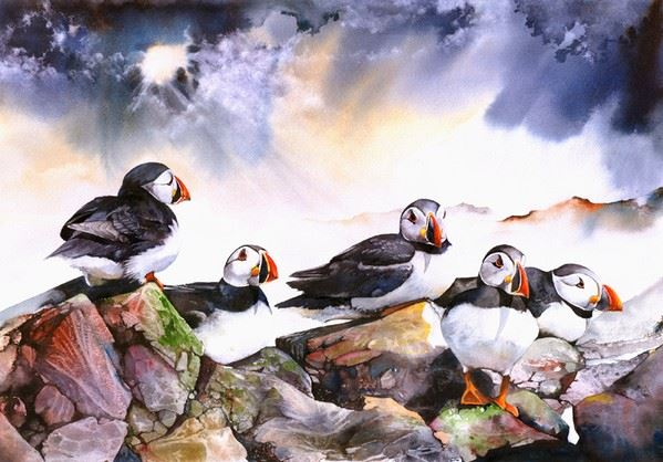 Peter-Williams.-Animalizm-v-akvareli.-Puffins.-Bumagaakvarel.-22h15-dyuymov (599x418, 61Kb)