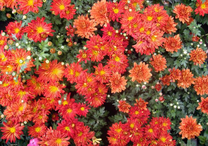 FlowerBeds0012_3_L (674x474, 97Kb)