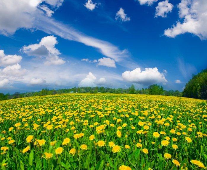 phoca_thumb_l_flower-219 (700x577, 113Kb)