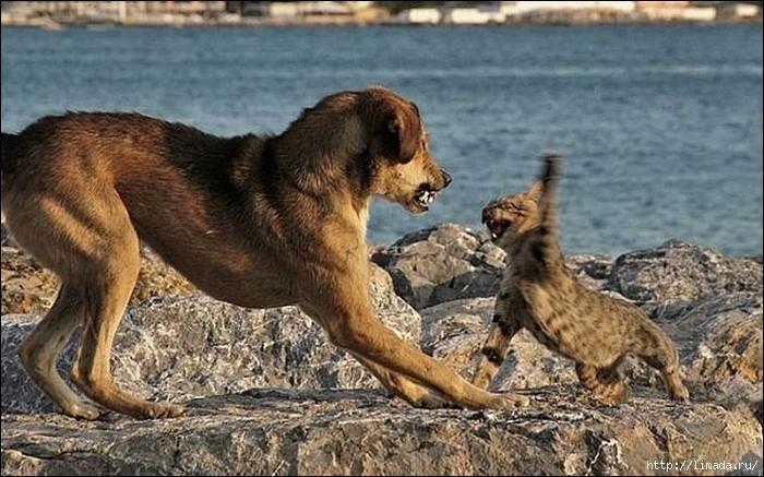 dogcat16 (700x437, 216Kb)