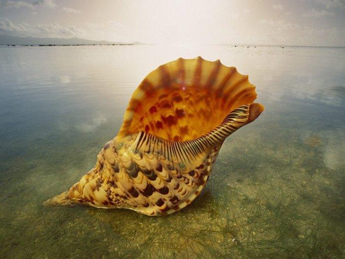 shells_33 (700x524, 62Kb)